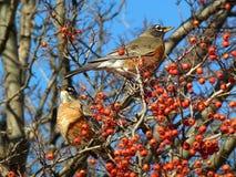 Ett par av fåglar Arkivfoton