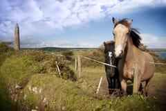 Ett par av härliga irländska hästar och det forntida runda tornet Arkivfoton