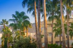 Ett par av högväxta palmträd står högt över en golfbana Palmträd på en bakgrund av berg och himmelsaneagoen Arkivfoto