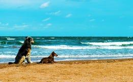 Ett par av hundkapplöpning på kusten royaltyfria bilder