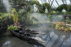 Ett par av infödda kanoter sitter i ett damm i rainforestavsnittet av trädgårdarna vid fjärden i Singapore royaltyfria bilder