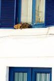 Ett par av katter som kopplar av på fönsterbräda Royaltyfri Fotografi