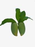 Ett par av mango Arkivfoton