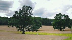 Ett par av nygifta personer som bort går bland träden arkivfilmer