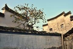 Ett persimonträd med persimonet bär frukt i Xidi, en liten forntida by i det Anhui landskapet i Kina nära de gula bergen Royaltyfria Foton