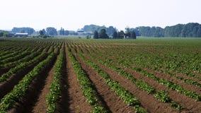 Ett potatisfält - Lafontaine, Ontario Arkivfoton