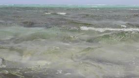 Ett Röda havetkrabbaslut upp av stock video
