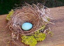 Ett rödhakes ägg i rede Royaltyfri Fotografi