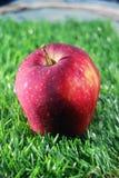 Ett rött äpple på gräset Royaltyfri Bild