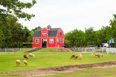 Ett rött hus i fårlantgården Royaltyfri Foto