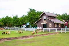 Ett rött hus i fårlantgården Royaltyfri Fotografi
