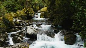 Ett regn Forest Waterfall lager videofilmer