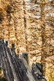 Ett ridit ut naturligt trästaket i solljus om den nya höstdagen i en idyllisk by på bygden - lantlig detalj fotografering för bildbyråer