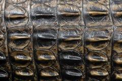Ett rikt brunt krokodilhudslut upp royaltyfria foton