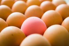 Ett rosa ägg Arkivfoto
