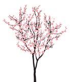 Ett rosa sakura för full blom träd (körsbärsröd blomning) på vit bakgrund vektor illustrationer