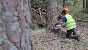 Ett sörjaträd nedgångar, når att ha klippts En skogsarbetare klipper sörjer trä arkivfilmer