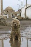Ett sammanträde för tillfällig hund i en lerig pöl Royaltyfri Bild