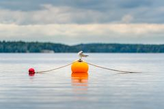 Ett seagullfågelanseende som vilar på en orange boj på en sjö Royaltyfri Fotografi