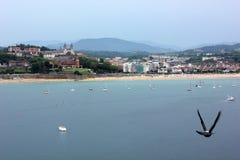Ett seagullflyg längs kusten arkivbilder