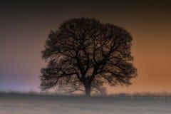 Ett silhouetted träd mot en färgglad natthimmel Fotografering för Bildbyråer