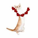 Ett skämtsamt litet strimmig kattkattungeanseende på bakre ben och innehav Royaltyfri Fotografi