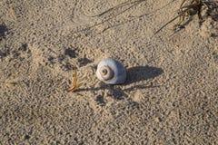 Ett sköljas upp på stranden ensamt skal Arkivfoto