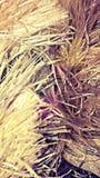 Ett skönhetsugrör/hår royaltyfria bilder
