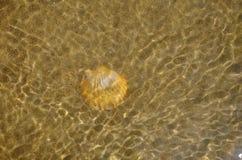 Ett skal i vatten på den sandiga stranden Fotografering för Bildbyråer
