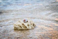 Ett skal på korall på stranden Royaltyfri Foto