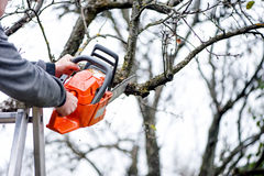 Ett skogsarbetarearbetarklipp förgrena sig från trädet för brandträ Royaltyfri Fotografi