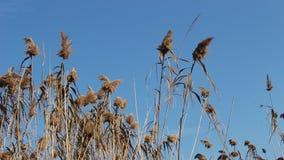 Ett skott av en gå av växter och en ljus vind lager videofilmer