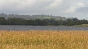 Ett skott av långt gräs med floden i bakgrund lager videofilmer