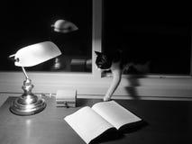 Ett skrivande in hus för katt till och med fönstret Royaltyfri Foto