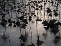 Ett slut upp sikten av solinställningen bak en djupfryst sjö i Parcen blom- De Paris, Paris arkivfoton