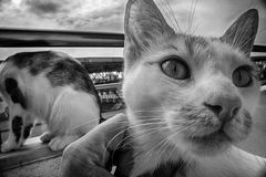 Ett slut upp ståenden av en gullig katt på balkong Royaltyfri Foto