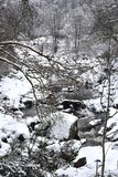 Ett snöig landskap med en ström och en snö täckte träd Royaltyfria Bilder