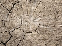 Ett snitt av ett gammalt träd med sprickor Arkivfoton