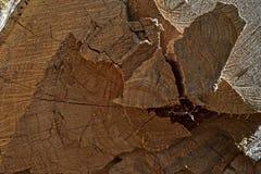 Ett snitt av ett träd för en bakgrund 01 Royaltyfri Fotografi