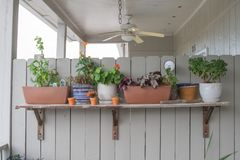 Ett sortiment av beautifully ordnade växter arkivbilder