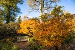 Ett ställe som vilar i guld- höstomgivning i den sydliga England parklanden royaltyfri fotografi