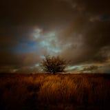 Ett stormigt landskap med det lilla trädet Julian Bound Fotografering för Bildbyråer