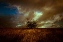 Ett stormigt tänt landskap med trädet Julian Bound Arkivfoton