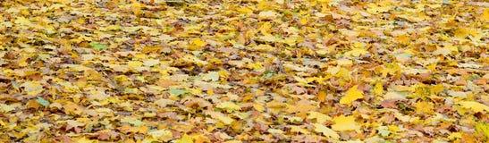 Ett stort antal stupade och gulnade höstsidor på jordningen Höstbakgrundstextur fotografering för bildbyråer