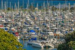 Ett stort antal yachter i marina, golfhamn, Auckland, i Nya Zeeland royaltyfria bilder