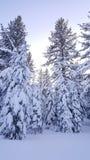 Ett stort belopp av snö som avverkar i vintern av 2017 i Lake Tahoe Royaltyfria Foton