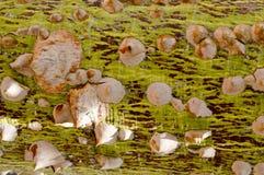 Ett stort läskigt träd med ett försett med en hulling skäll med skarp exotisk tropisk sällsynt ovanlig unik farlig textur för gro arkivfoton