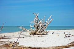 Driftwood på en strand arkivbilder