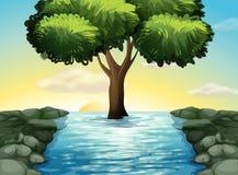 Ett stort träd i mitt av floden royaltyfri illustrationer