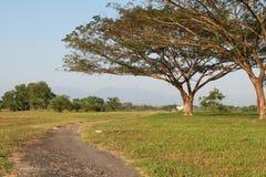 Ett stort träd och den lilla kurvvägen Royaltyfri Bild